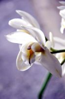 ProFil d'oRcHidee by Fre-D