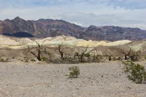 Desert in Death Valley by MCL28