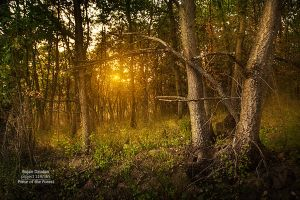 Piece of the forest by Dzodan