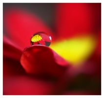 macro droplet by mzkate