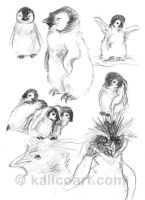 Penguin Sketches by kalicothekat