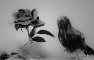 decayed love by shadow-in-the-wind14