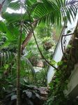 The Palm House, Jardin Des Plantes, Lille by aegiandyad