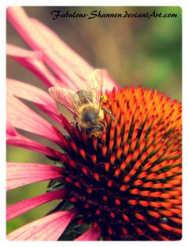 Flower and a bee by Fabulous-Shannen
