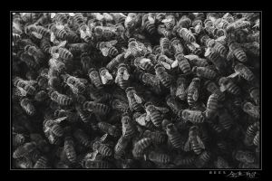 Bees by avotius
