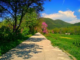 Road by hellenicwarrior