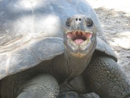 Excited Tortoise by riverTurtle790