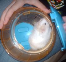 Unmamed Hamster 2 by Fennic