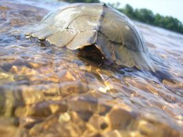 Map Turtle Shell by cornadious