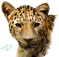 Leopard Color 2 by Joava