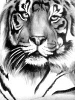 Tiger_Unfinished 2_Close Up by artistelllie