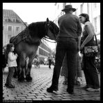 Horse... by EricForFriends