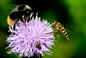 Bee Hover by ariimage