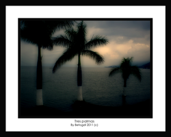 Tree palms in a soft calm by BetoGDL1