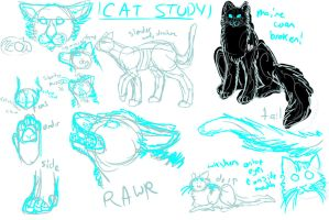 cat study/anatomy structure derp herp by AElOU
