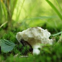 The fungus and the snail by psychostange