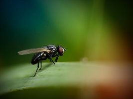 The Fly II by Mizth
