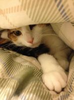 Ayumi's Quilt Cave by DarlingChristie