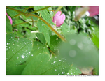 Raindrop Reverie02 by annie252