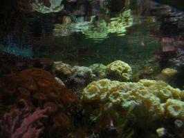 soft corals by child-of-aros