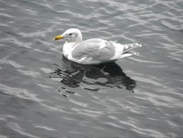 Seagull On The Water I by Photos-By-Michelle
