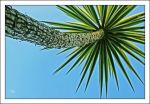 Palm Tree Love by TeaPhotography
