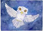 Snowy Owl - Hedwig by Starrydance