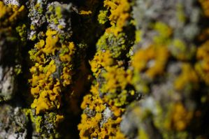 lichens on tree A 6.25.11 by serealis
