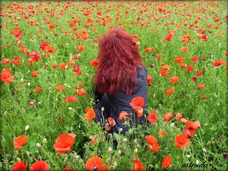 Alone With The Poppies by Estruda