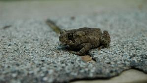 Toad on the Trail by AlgeriArts