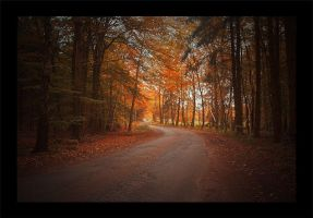 Autumn Road II by JessicaBader