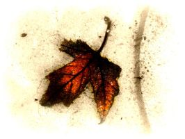 leaf dying in water by LBBPhotography