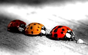 Lady bugs by angela-bryan