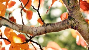 Fall tree branch by ecKKKo