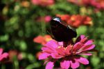 Butterfly on a flower by danuu0bt