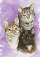 Three Cats by Pannya