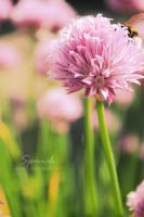 Chives by spmich