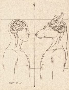 Comparative Anatomy Human/Anthro Wolf Brain by RussellTuller