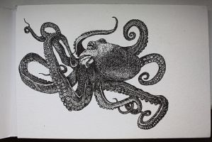 Octopus by Nicole-Confusion