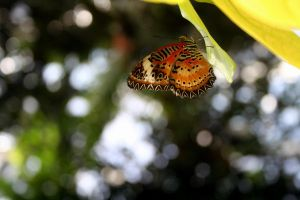 Butterfly Bokeh by PlutoHasCows