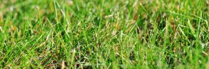 Widescreen grass wallpaper by phranzee
