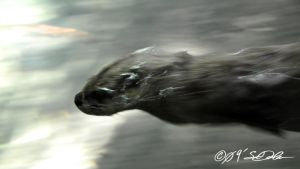 Otter Diver by helvainia