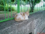cat that hangs round the school by LenaMorgue90