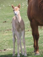 Foal 01 by Eltear-Stock