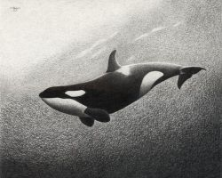 Balance - Orca by HOULY1970