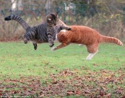 cat_fighting_cat by KuroInTheNightSky