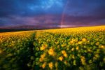 Spring Light by hougaard