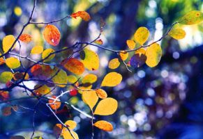 Fall Leaves by Tailgun2009
