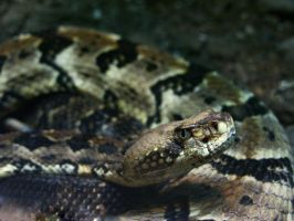 nake by CorazondeDios