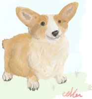 Corgi request by eeveerockshard